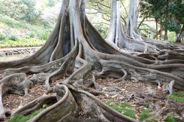 imagen del articulo: ¡Cuando en las raíces hay gratitud en el tronco y en las ramas hay alegría!