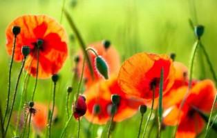imagen del artículo: La primavera la sangre altera