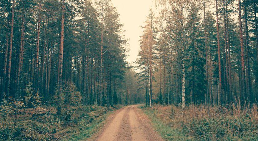 imagen artículo: ¿Qué nos depara el nuevo curso? Disfrutar del camino
