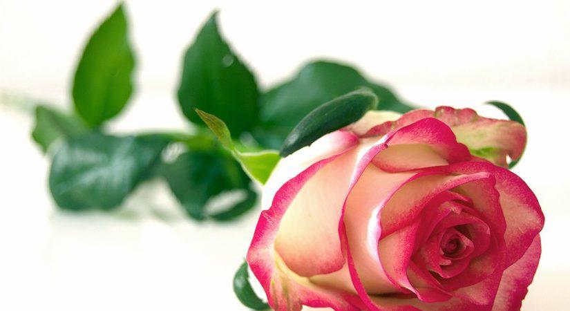 imagen artículo: Feliz día de Sant Jordi, Feliz día de luz
